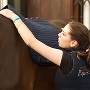 Collective Equestrian Livery & Facilities