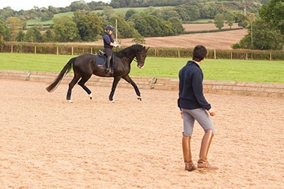 Alex Harrison - Collective Equestrian