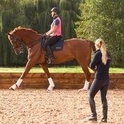 Collective Equestrian - Short Courses
