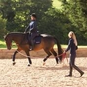 Collective Equestrian - Short Courses